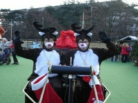 Reindeer Acts for Christmas Events